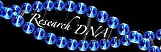 Rassegna degli scrittori del DNA di ricerca