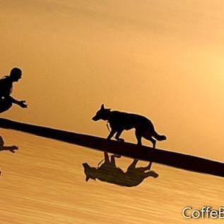 Transtorno do Déficit de Atenção e Propriedade de Animais de Estimação
