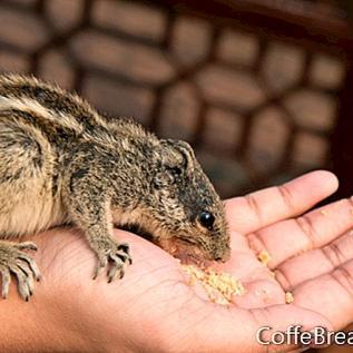 Lendav orav - lendav orav lemmikloomana