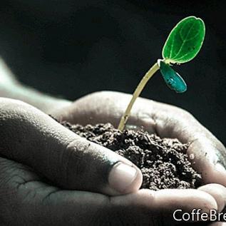 Osnovni vodnik za zagon semen za sajenje