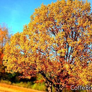 Prirodni načini ukrašavanja za jesen