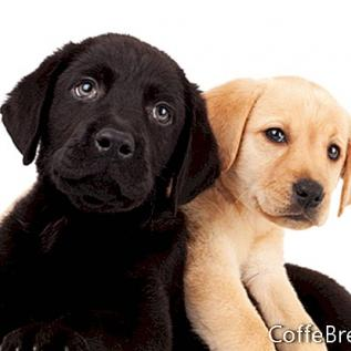 Ящики и взрослые собаки