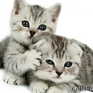 Mačke i odmor stres