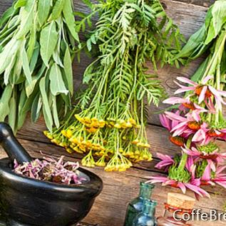 Antiinflamatorios a base de hierbas