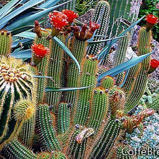 Plantações tropicais com cactos e suculentas