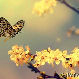 טיפים קלים לניקוי אביב