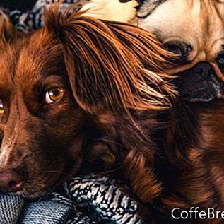 Hondenvoer Recall voor Diamond Pet Food