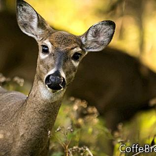 Whitetails de caza en tierra ¿Es posible?