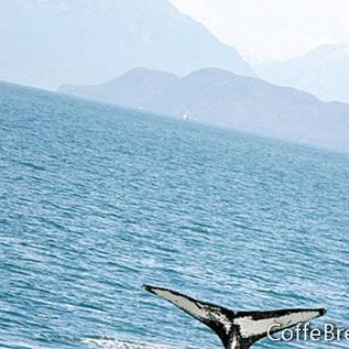 Kenai fiordų nacionalinis parkas