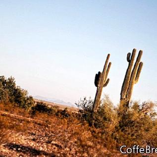 Desperation Arts - Die Kunstgalerie von Eastern Nevada Ely, Nevada