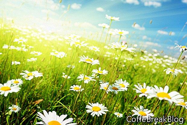 Plantar semillas para citas exitosas