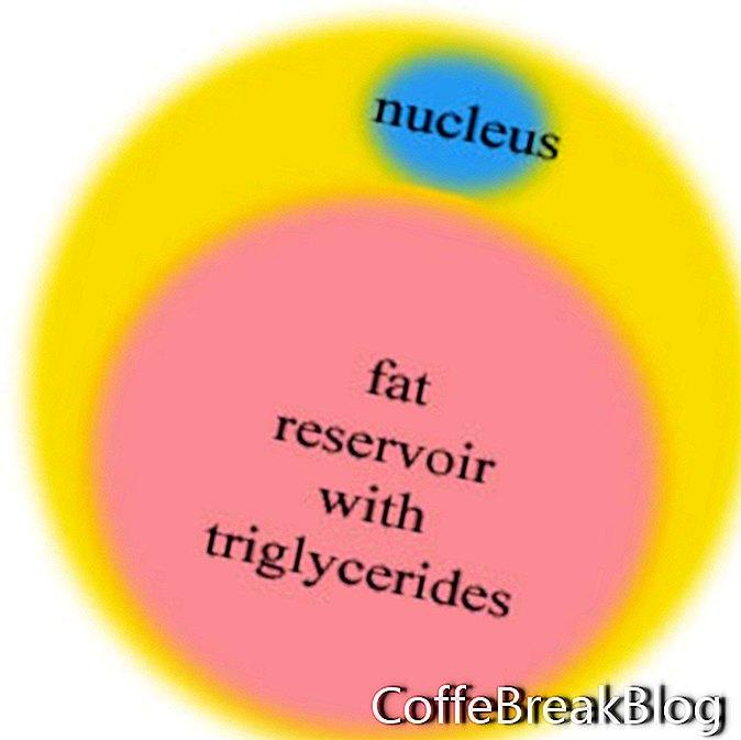 Tłuszcz brzuszny / Tłuszcz trzewny