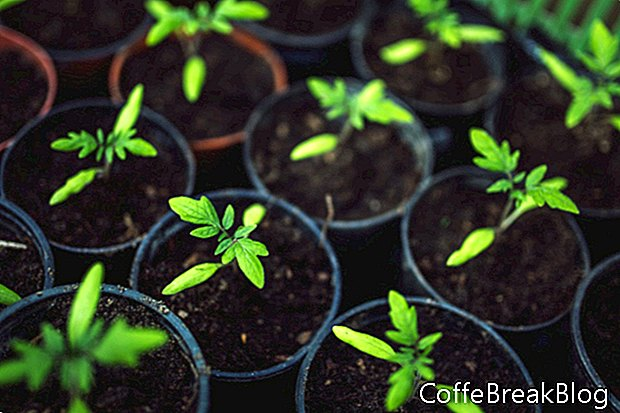Comprensión de la terminología básica de plantación
