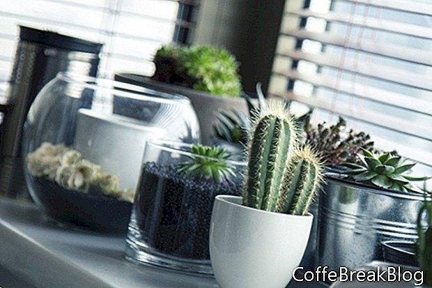 Summering النباتات المنزلية في الهواء الطلق
