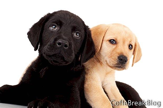 Mezcla de galletas para perros en un frasco
