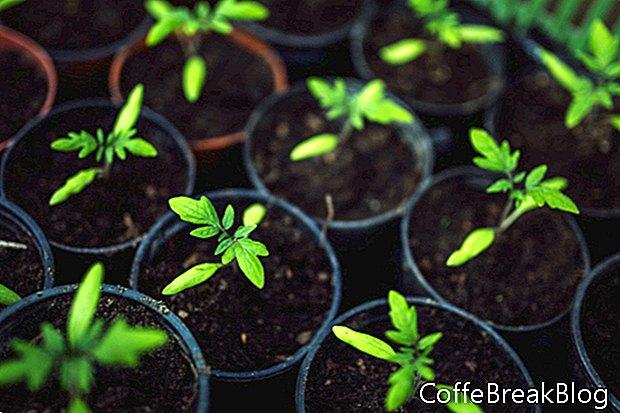 Crecimiento de bellezas ornamentales en el jardín de bulbos