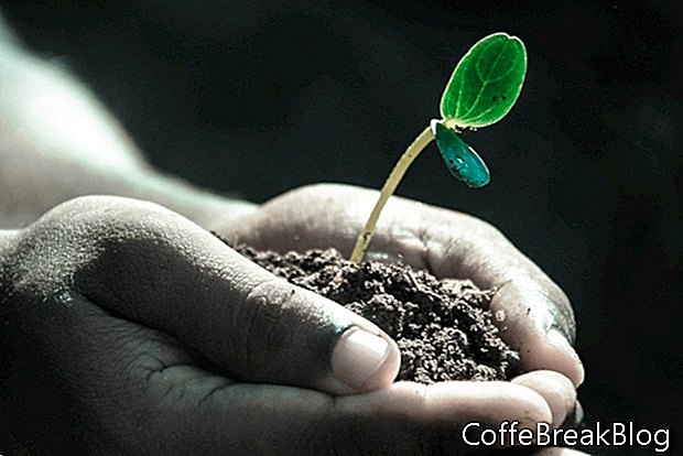 Grundläggande guide för att starta frön för plantering