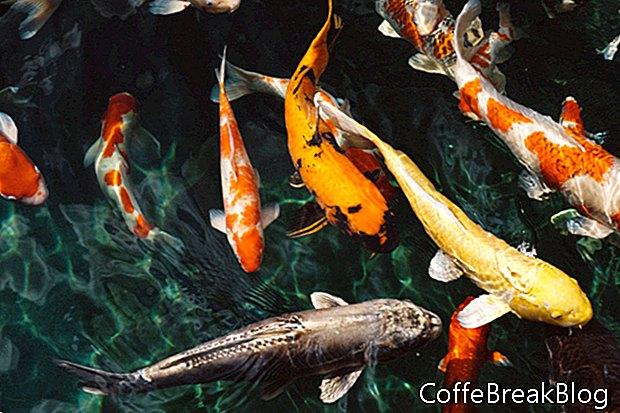 Pescado como regalo