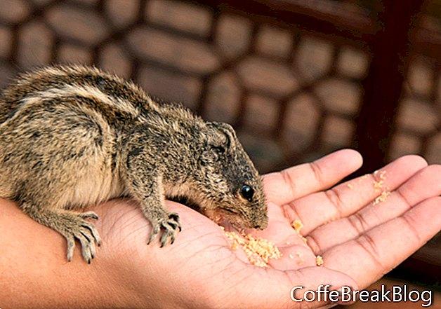 Kostenlose Postkarten für exotische Haustiere