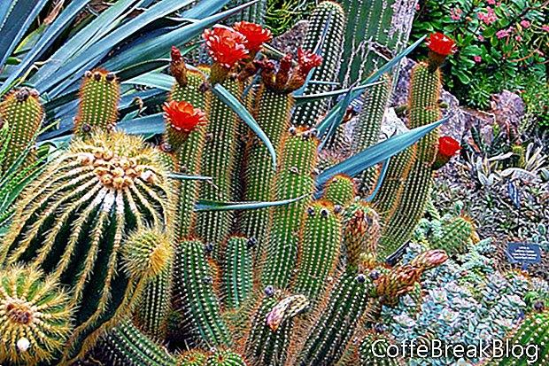 Cacti dan Succulents untuk Keranjang Gantung Indoor