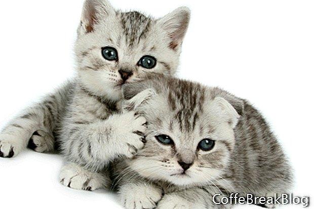 Котки и коледни украси