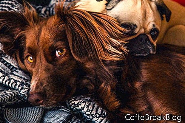 Отзоваване на храна за кучета за разширено хранене на животните