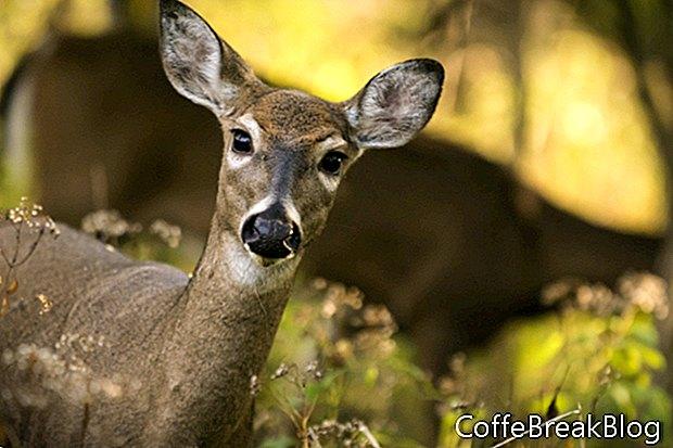 Ground Hunting Whitetails Ist das möglich?