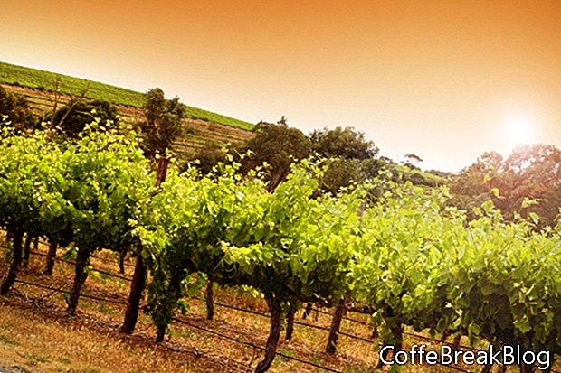 Wijn in Californië