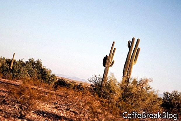 Õues elamine kõrbes edelaosas