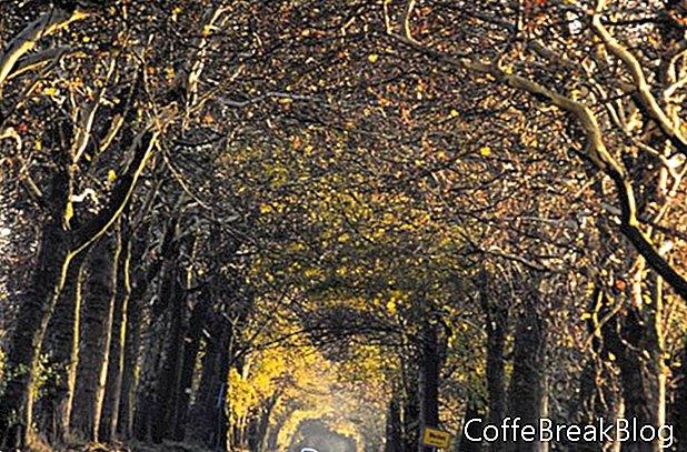 Deutschlands von Bäumen gesäumte Alleen