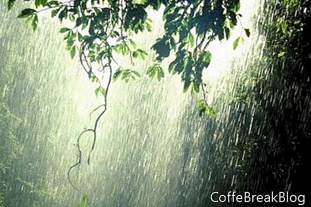 In Bangalore kann es therapeutisch sein, den Regen zu riechen
