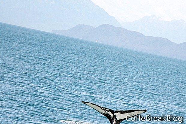 ציפור המדינה של אלסקה