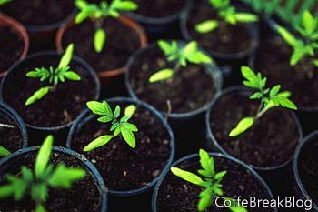 Hirschresistente Pflanzen