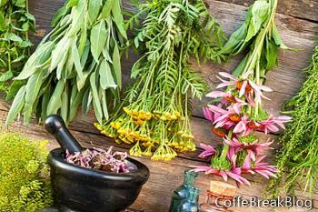 Top 10 Herbal Untuk Musim Panas Bug Gratis